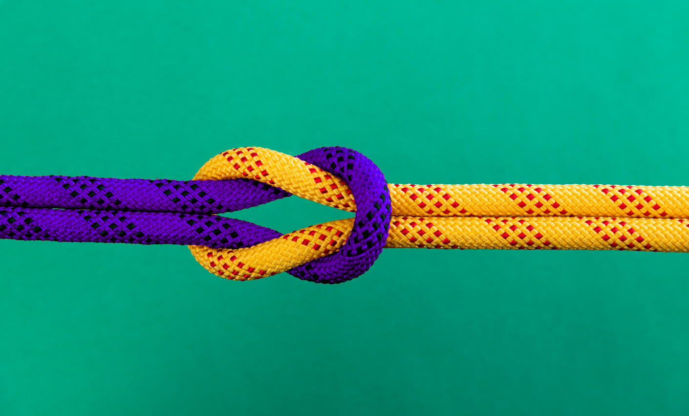Reef knot on green background_purple-yellow